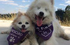 VIDEO. Amitié canine: Un petit chien accompagne partout son copain aveugle