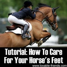 """Please Share This Page: Photo – © Fotoimpressionen – Fotolia.com We found a great article on the important subject of taking care of your horse's hooves. The link is after our commentary. Unfortunately, a significant number of horse owners """"put a foot wrong"""" in surmising that hoof care is not of great concern. What's more, …"""