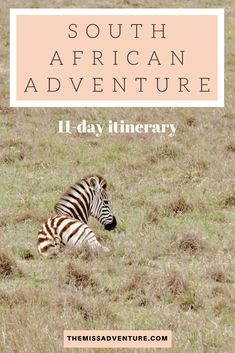 The MissAdventure inspires women to explore the globe together! Join our community of 000 amazing women and help us foster a culture of tolerance, learning and collaboration. Lions Head Cape Town, Wildlife Safari, Rhinos, Game Reserve, Destin Beach, African Safari, Africa Travel, Zebras, Day Trip