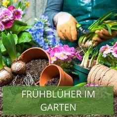 Der Frühling kommt mit großen Schritten näher und damit auch der Zeitpunkt um sich über die Beetgestaltung im Frühjahr Gedanken zu machen. In unserem Magazin erklären wir, welche Pflanzen sich am besten eignen, worauf Sie beim Beet anlegen achten sollten und geben Ihnen Blumenbeet Ideen für den heimischen Garten. Planter Pots, Gardening, Daffodils, Thoughts, Plants, Ideas, Lawn And Garden, Horticulture