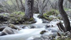 https://flic.kr/p/247AViW | El bosque/ The forest/Madrid | OLYMPUS DIGITAL CAMERA