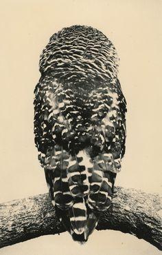 » Masao Yamamoto: Tori at Yancey Richardson Gallery
