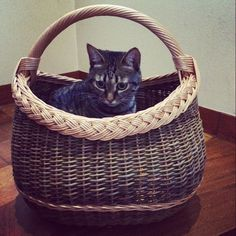 this is not yours ;) #basket #kono #cat