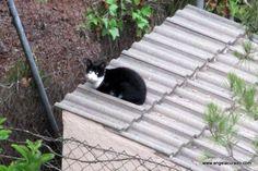 https://flic.kr/p/xSpJZS | Cat.