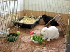 En løbegård, fra eks. Zooplus, kan let sættes op indenfor - den kan fjernes når du er hjemme og kaninen må rende frit.