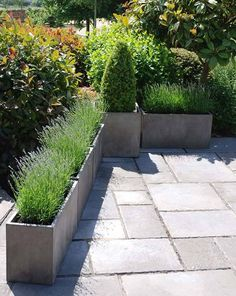 Urban Garden Design - Venice Trough Planters are lightweight and durable. The trough shape works well defining an area or creating a border. Large Garden Planters, Garden Troughs, Trough Planters, Rectangular Planters, Outdoor Planters, Outdoor Gardens, Long Planter Boxes, Urban Planters, Plant Troughs