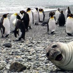 Nature - Funny Animals