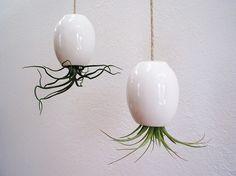 Hanging AirPlant Pod tm  Gorgeous Glossy White by mudpuppy on Etsy