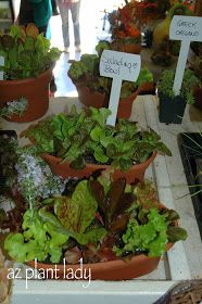 Tired of Buying Lettuce? Plant a Salad Bowl - Ramblings from a Desert Garden Fall Vegetables, Container Gardening Vegetables, Growing Vegetables, Vegetable Garden, Peony Care, Growing Lettuce, Lawn And Landscape, Desert Plants, Garden Care