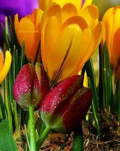 "29 Likes, 5 Comments - naturallife (@nature_food_flower) on Instagram: ""#природа #russia #flowergram #московскиесезоны #москва #зелень #цветы #красота #nature #flower…"""