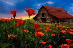 Poppy Field Barn