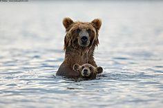 bear-photography-14 // big bears and little bears ^^ http://www.boredpanda.com/bear-cubs-photography-parenting/