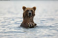 bears with their cubs