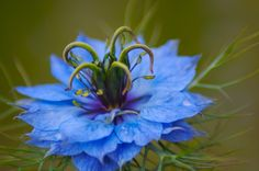 082 Flowers | Blue