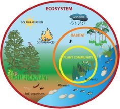 Infographic demonstrating the ecosystem services of wetlands eco ecosystem chart used to show students exactly what makes up an ecosystem student could also ccuart Images