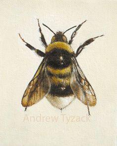 'British Bumblebee Queens', hand coloured mezzotint, by Andrew Tyzack