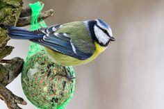 #Pokarmy dla #ptaków zimujących