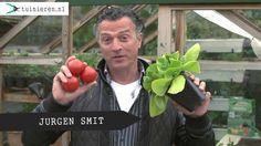 Moestuin bemesten: groenten, fruit en kruiden - Tuinieren.nl