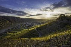 Moselle and Vineyards by Andreas Pidde