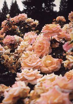 bon anniversaire mon amour! que ta 52ème année soit fleurie et lumineuse, amoureuse et sereine, inventive et créative, faite d'humour et de dérision, toi, moi...