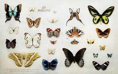 Peter Lippmann, Cartier Art Magazine, Collections