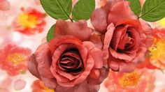 #1918308, rose category - Widescreen Wallpapers: rose pic