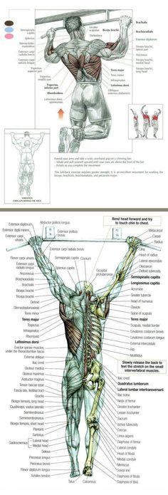 #anatomía del ejercicio #rubenentrenador.com #personal trainer valencia