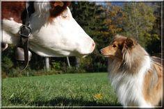 La Complicité Animale