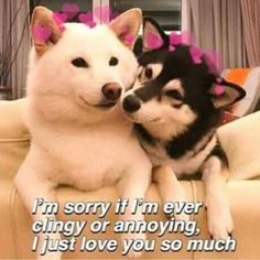 wholesome memes to send to your best friend - memes to send to your best friend Relationship Memes, Cute Relationships, Wholesome Pictures, Heart Meme, Cute Love Memes, Love You Memes, Crush Memes, Cute Messages, Lovey Dovey