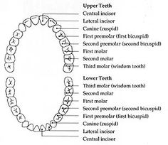 Dental Health Lesson Plans From Oral B