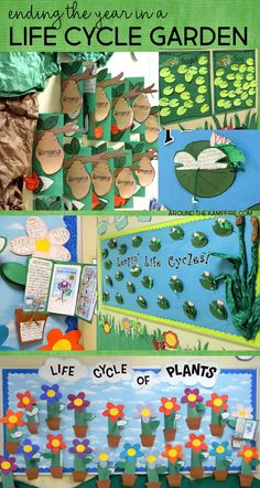Life cycle garden Spring bulletin board ideas that are the perfect science hallway displays for a parent open house. We displayed butterfly, frog, and plant life cycle activities. Kindergarten Science, Science Classroom, Teaching Science, Science Activities, Science Projects, Montessori Science, Sequencing Activities, Science Ideas, Teaching Writing
