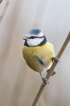 Cute little fluffy bird.