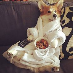 The Best Puppies - Dog Pics - Puppy Photos - Best Dog Funny Pictures Best Puppies, Cute Puppies, Cute Dogs, Dogs And Puppies, Neko, Welsh Corgi Pembroke, Puppy Facts, Silly Dogs, Pet News