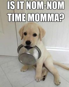 funny animals quotes pictures 259 (57 pict) | Funny pictures