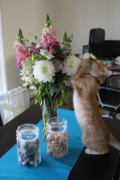 This curious girl who is sniffing a flower for the very first time. | 27 Pictures Of Cats That Will Warm Your Cold, Grinch-Like Heart