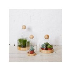 Holly's House Glass Terrarium with Ball - Medium ($130) ❤ liked on Polyvore featuring home, home decor, floral decor, glass terrarium, holly's house, glass home decor and succulent terrarium