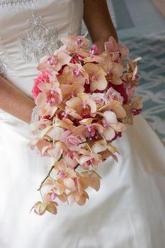 Me encanta el color de las orquídeas