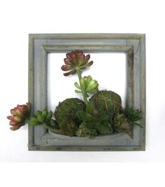 Bloom Room Succulent Wall piece-Green & Red