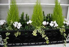 Winter window box - could do this with my little conifer that needs repotting an. - Winter window box – could do this with my little conifer that needs repotting anyway - Winter Planter, Fall Planters, Garden Planters, Terrace Garden, Evergreen Planters, Black Planters, Fence Garden, Evergreen Trees, Diy Garden