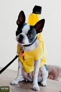 Dog Halloween Costume Party