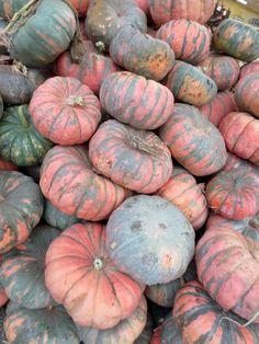 Speckled Hound Pumpkins