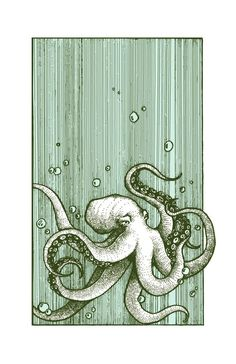 Drawings Octopus x - This is a digital reproduction of an original pen and ink drawing. Approximately x printed on crisp 80 lb cardstock. All prints are packaged in a vinyl sheath with a thick piece of matboard for protection. Art And Illustration, Illustrations, Octopus Illustration, Octopus Art, Octopus Drawing, Octopus Sketch, Feather Drawing, Octopus Tentacles, Stylo Art