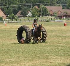 horse obstacle challenge - Google Search
