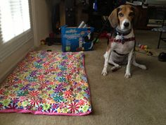 Life With Beagle: GIVEAWAY: Pee pad by Spoiled Pup Boutique -- Check out my review of this stylish and economical pee pad, and enter to win one!