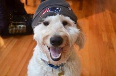 Put me in coach! #PETriots #Patriots