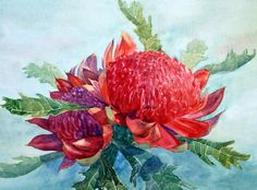 Large watercolor painting of a Red Waratah, the State flower of New South Wales, Australia. Painted by Joe Cartwright australian artist and tutor.