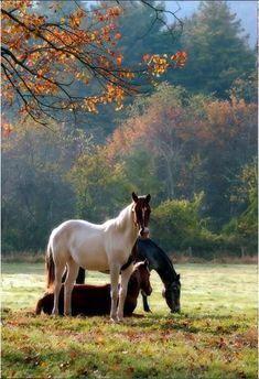 Horses in an autumn field....