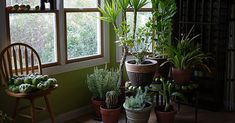 Share Tweet + 1 Mail   Most people have indoor plants around them in day-to-day life, whether it's in the home or in the ...
