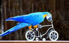 Colorful Parrots Riding Tiny Bikes & Rollerskates: Free Circus Show   San Mateo   Funcheap