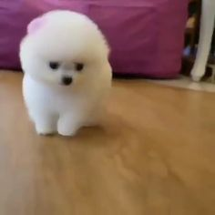 She is so adorable 😍,Funny, Funny Categories Fuunyy Cute Pets Cute Small Dogs, Cute Baby Dogs, Baby Animals Super Cute, Cute Little Puppies, Cute Stuffed Animals, Cute Cats And Dogs, Cute Dogs And Puppies, Cute Little Animals, Cute Funny Animals